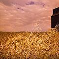 Grain Elevator And Crop by Darren Greenwood