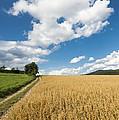 Grainfield Blue Sky by Matthias Hauser