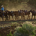 Grand Canyon Mules by Tom Singleton