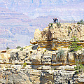 Grand Canyon Overlook by Julie Niemela