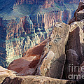 Grand Canyon Roxie Roller by Bob Christopher