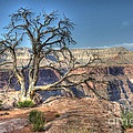 Grand Canyon Tree At Toroweap by Bob Christopher