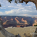Grand Canyon Tree by Cassie Marie Photography