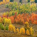 Grand Teton Fall Color by Sandra Bronstein