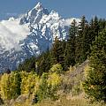 Grand Teton by Sandra Bronstein