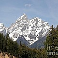 Grand Tetons by Living Color Photography Lorraine Lynch