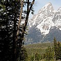 Grand Tetons Vertical by Living Color Photography Lorraine Lynch
