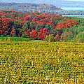 Grand Traverse Winery In Autumn by Optical Playground By MP Ray