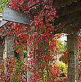 Grape Leaves On Columns by Mick Anderson