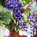 Grape Vines by Karen Casciani