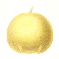 Grapefruit by Granger