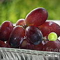 Grapes by Gwyn Newcombe