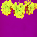 Grapes by Johnny Greig