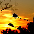 Grasping The Sunset by Ms Judi