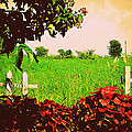 Grass and Fence1