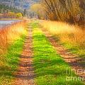 Grass And Shadows by Tara Turner