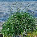 Grass On The Beach by Randy Harris