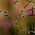 Grass Seeds by Kim Henderson