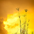 Grass Silhouette  by Johan Larson