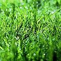 Grass by Sinclair Stammers