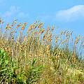 Grass Waving In The Breeze by Tom Leach