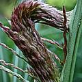 Grass Worm by Susan Herber
