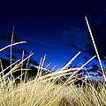 Grasses by Dexter Fassale