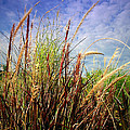 Grasses Standing Tall by Joyce Dickens