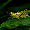 Grasshopper 1 by Douglas Barnett