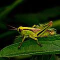 Grasshopper 2 by Douglas Barnett