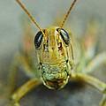 Grasshopper  by Ryan Cummings