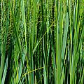 Grassland by Rachel Cohen