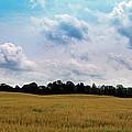 Grassy Country Fields by Ms Judi