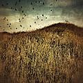 Grassy Hill Birds In Flight by Jill Battaglia