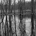 Gray Day Reflections by Michael Peychich