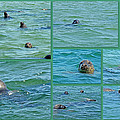 Gray Seals At Chatham - Cape Cod by Mother Nature