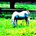 Grazing Horse by Bill Cannon