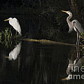 Great Blue Heron And Great Egret At Day's End by John Arnaldi