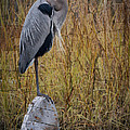 Great Blue Heron On Spool by Debra and Dave Vanderlaan