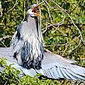 Great Blue Heron by Paul Fell