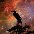 Great Blue Heron Viewing The Cosmos by J Larry Walker