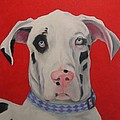 Great Dane by Pet Whimsy  Portraits