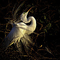 Great Egret In Great Light by Rob Travis