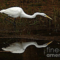 Great Egret Reflection 2 by Bob Christopher