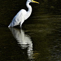 Great Egret Reflection  by Saija  Lehtonen