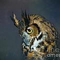 Great Horned Owl by Betty LaRue