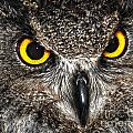 Great Horned Owl by Diane E Berry