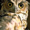 great horned Owl by Matt Suess