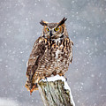 Great Horned Owl by Paul Bruch Photography