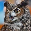 Great Horned Owl Portrait by Lloyd Alexander